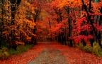 Autumn Angst: [Circle of Life Ode – Beta]